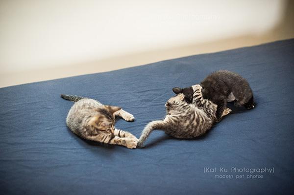 Adoptable Kittens_23
