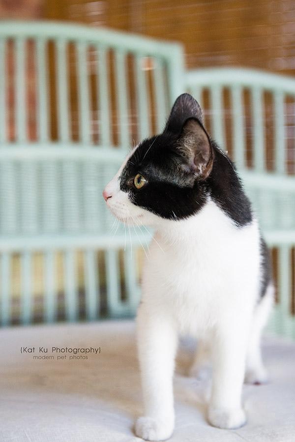 Kat Ku Photography - Adopt Pippa_1