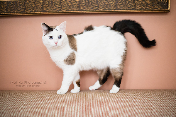 Kat Ku Photography_Adopt Duchess the Cat_01