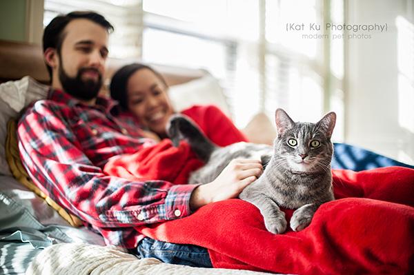 Kat Ku Photography - Dorian the Gray Cat