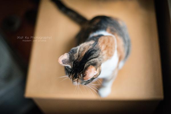 Kat Ku Photography_Josie and the Pussycats_04