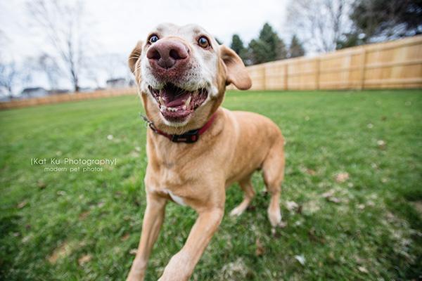 Kat Ku - Dexter Michigan Dog and Pet Photography_ 15