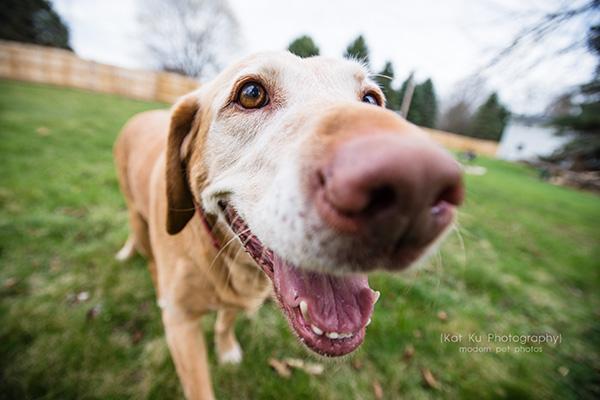Kat Ku - Dexter Michigan Dog and Pet Photography_ 16