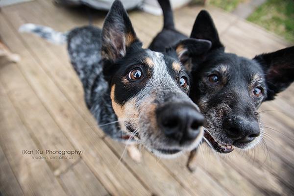 Kat Ku - Dexter Michigan Dog and Pet Photography_ 20