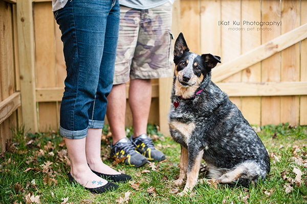 Kat Ku - Dexter Michigan Dog and Pet Photography_ 21