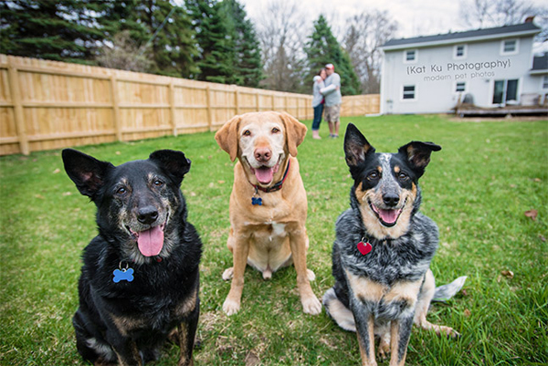 Kat Ku - Dexter Michigan Dog and Pet Photography_ 26