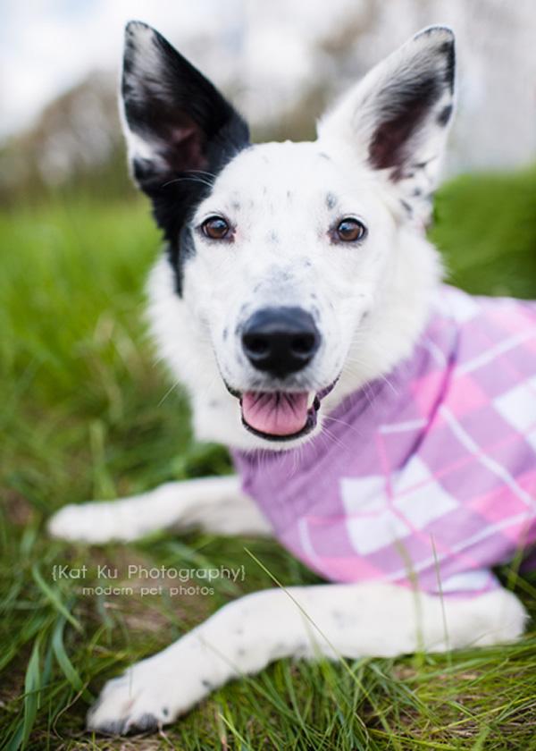 Kat Ku Pet Photography - Walk and Wag Fundraiser_11