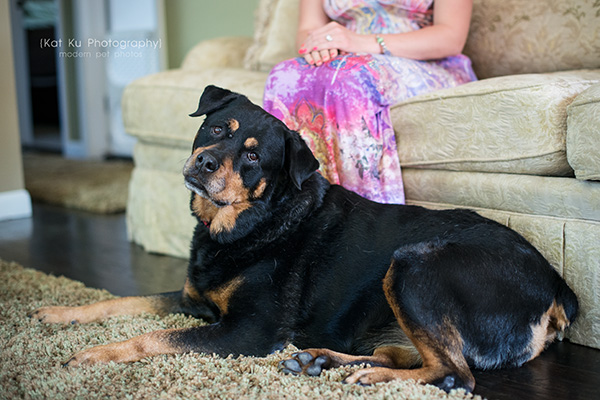 Kat Ku Photography_Canton Pet Photography_04