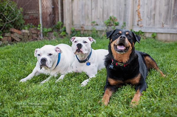 Kat Ku Photography_Canton Pet Photography_12