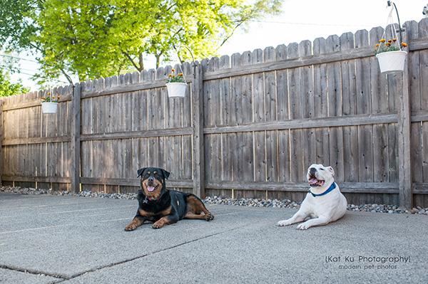 Kat Ku Photography_Canton Pet Photography_24