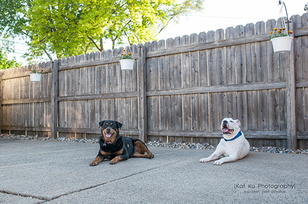Kat Ku Photography_Canton Pet Photography_24
