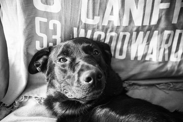 Kat Ku Photography_Diamond_Troy Pet Photography_04
