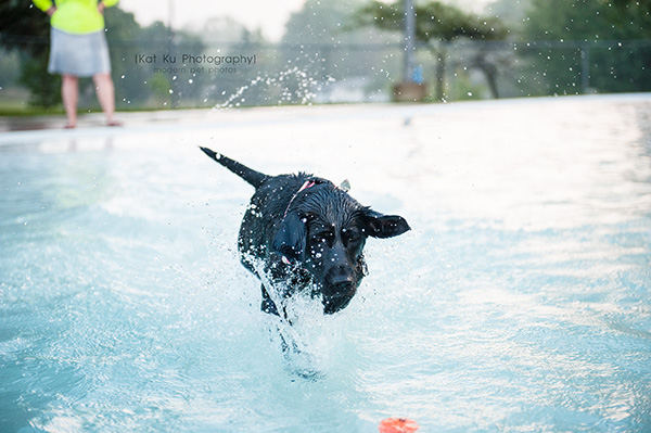 Kat Ku Photography_Ann Arbor Buhr Park_Dog Swim_17
