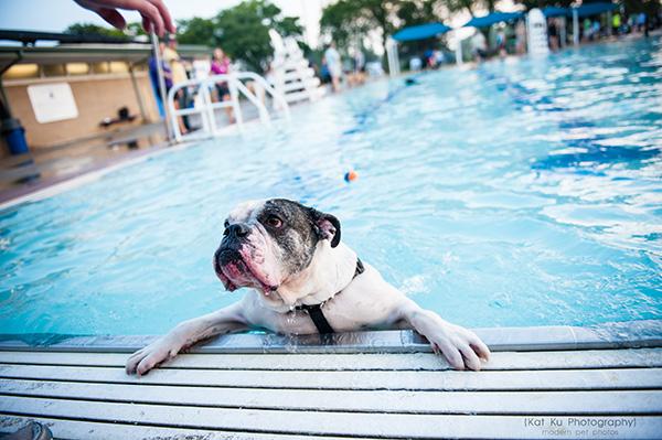 Kat Ku Photography_Ann Arbor Buhr Park_Dog Swim_19