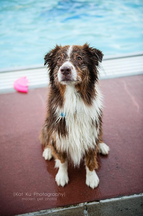 Kat Ku Photography_Ann Arbor Buhr Park_Dog Swim_21