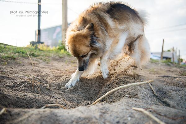 Kat Ku Photography_MoMo_Novi Pet Photography_15