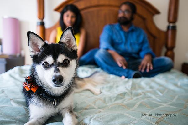 Kat Ku_Troy Pet Photos_Alaskan Klee Klai_08