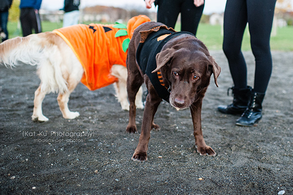 Olsen Dog Park_Kat Ku Photography_Ann Arbor_03