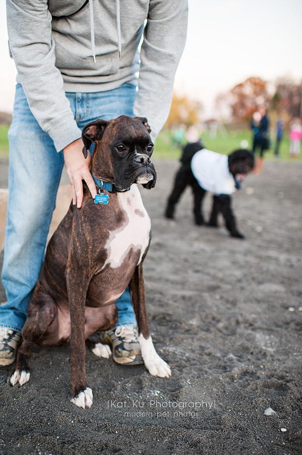 Olsen Dog Park_Kat Ku Photography_Ann Arbor_10