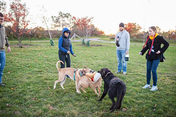 Olsen Dog Park_Kat Ku Photography_Ann Arbor_20