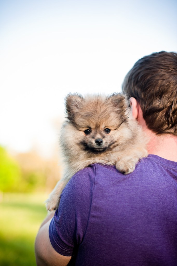(All Rights Reserved) Kat Ku Photography - Ollie the Pomeranian