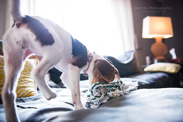 Kat Ku_Benny and Lulu_Beagle_28
