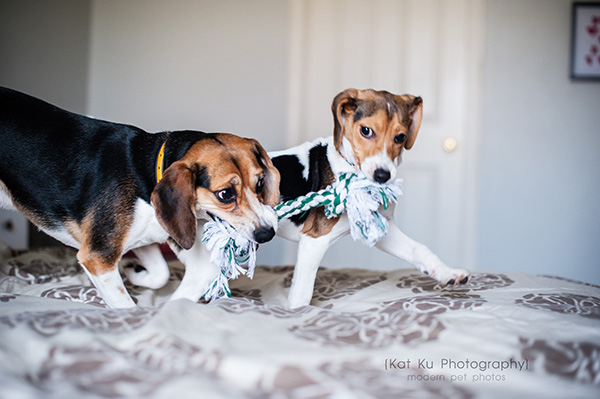 Kat Ku_Benny and Lulu_Beagle_29