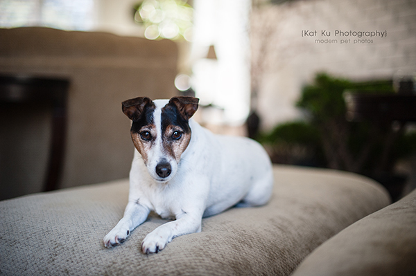 Kat Ku_Brighton Pet Photography_02