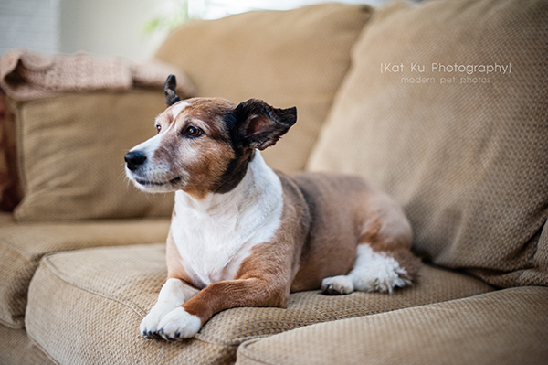 Kat Ku_Brighton Pet Photography_10