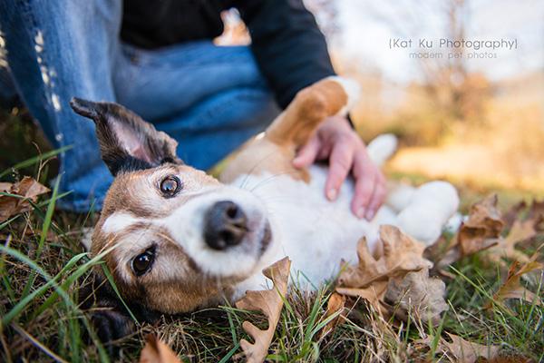 Kat Ku_Brighton Pet Photography_17