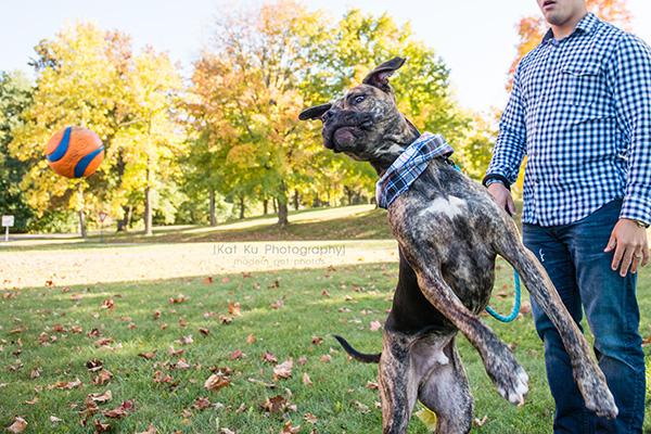 Kat Ku_Delilah and Tucker_Michigan Pets_19