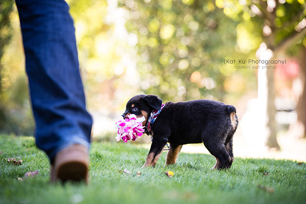 Kat Ku_Gia Rottweiler Puppy_12