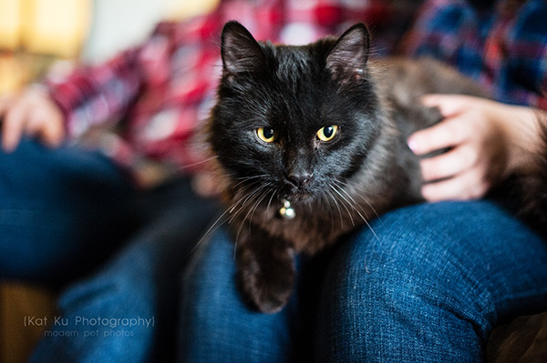 Kat Ku_Noodle_Pet Photography_15