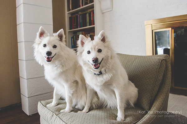 Kat Ku_Fitz and Floyd_American Eskimos_14