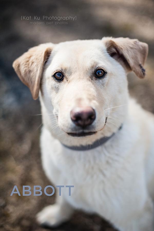 Kat Ku_POET Animal Rescue_Abbott_01