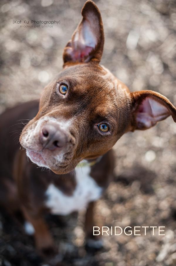 Kat Ku_POET Animal Rescue_Bridgette_03