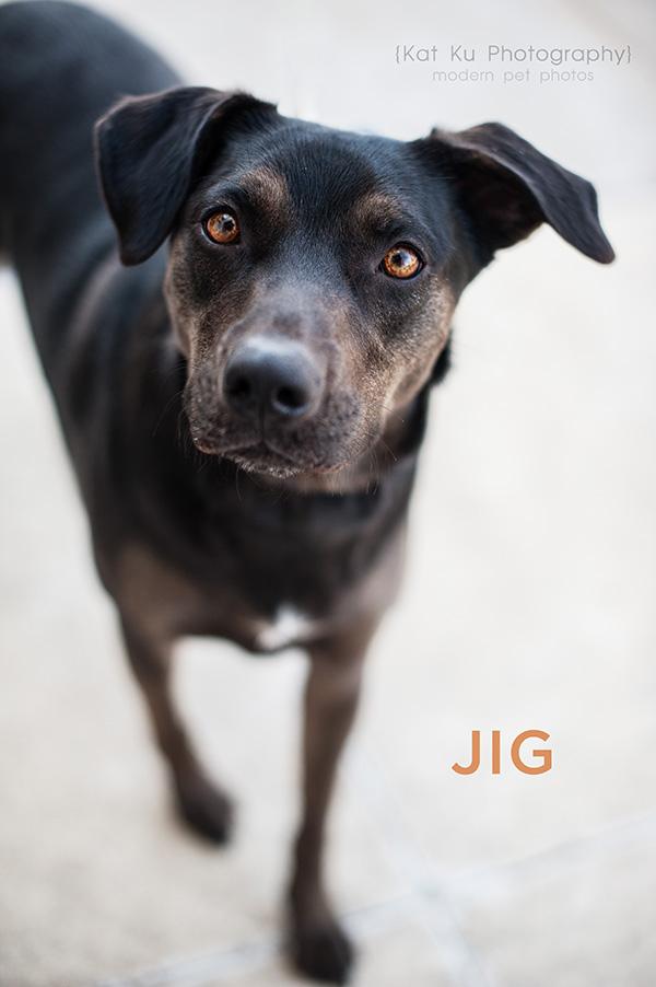 Kat Ku_POET Animal Rescue_Jib_05