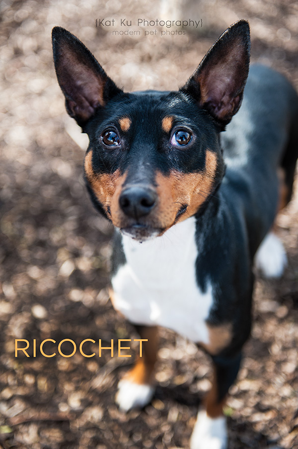 Kat Ku_POET Animal Rescue_Richochet_07