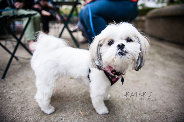 Kat Ku Photography_Dogs of Detroit_Campus Martius_11