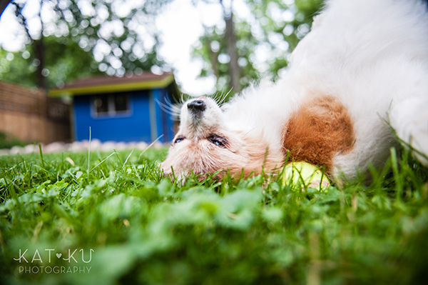 Kat Ku_Ann Arbor Pet Photography_Karly Boy and Poochie_18