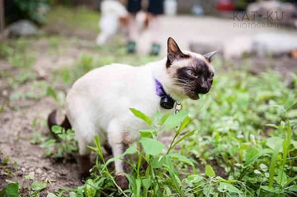 Kat Ku_Ann Arbor Pet Photography_Karly Boy and Poochie_22