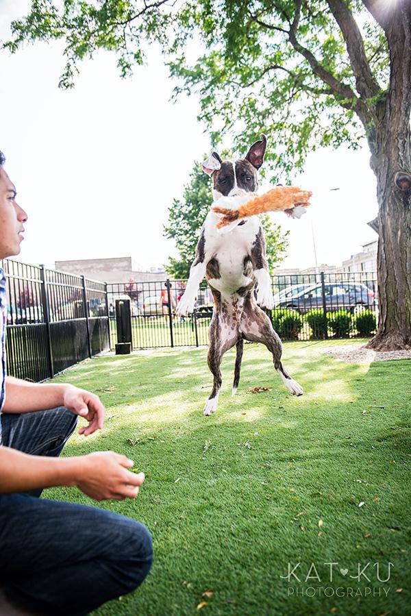 Kat Ku Photography_Detroit Pet Photos_Auggie_05