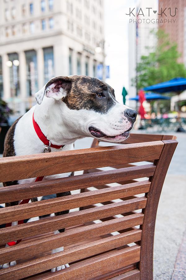 Kat Ku Photography_Detroit Pet Photos_Auggie_10