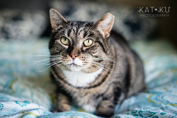 Kat Ku Photography_Mattee and Roger_Michigan Pets_01