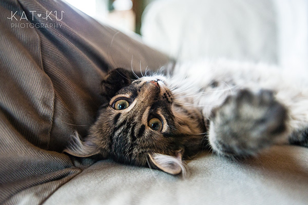 Kat Ku_Bernese Mountain Dog_Detroit Pet Photography_05