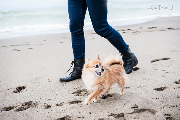 Kat Ku_San Francisco Pet Photos_Wheezy and Tito_17