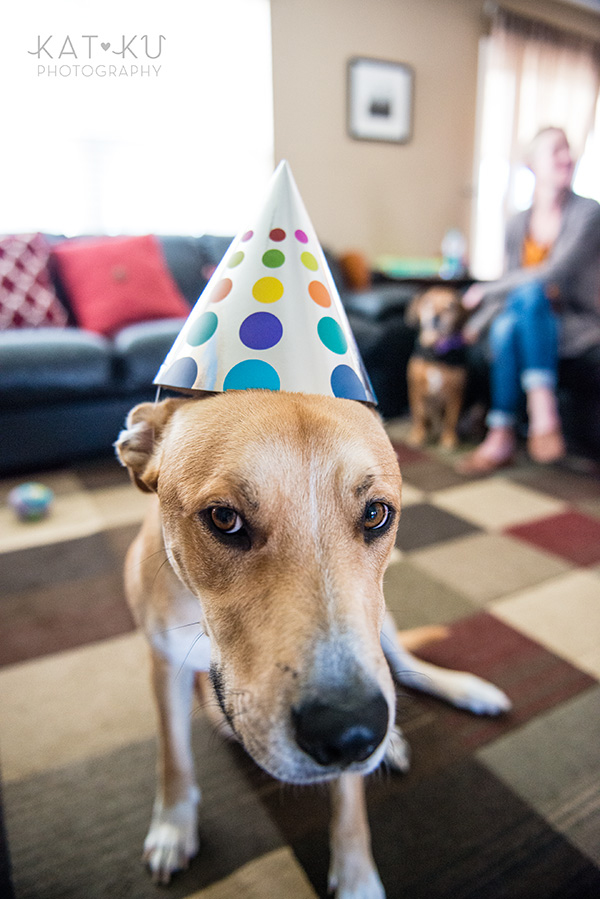 All Rights Reserved_Kat Ku_Birthday Puppy Party_21