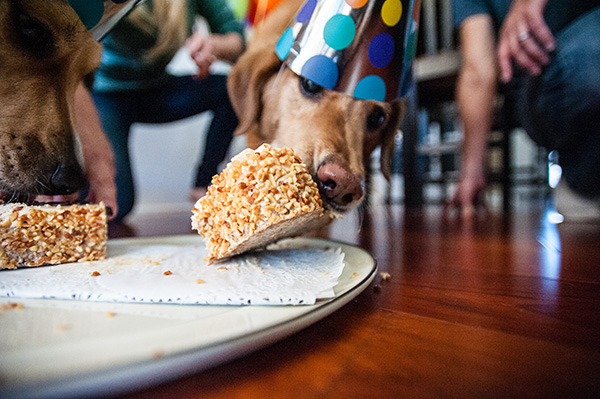 All Rights Reserved_Kat Ku_Birthday Puppy Party_23