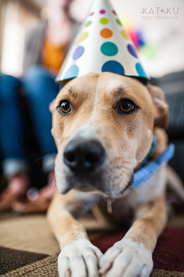 All Rights Reserved_Kat Ku_Puppy Party Birthday Bash_04