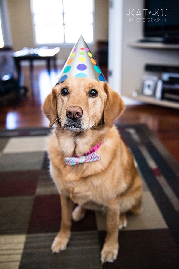 All Rights Reserved_Kat Ku_Puppy Party Birthday Bash_05